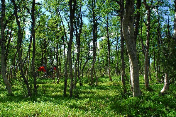 Cykeltur Längs Den Gamla Vackra Skalstugevägen